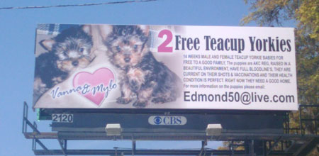 Yorkie scam billboard