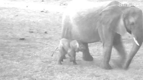 Africa webcam